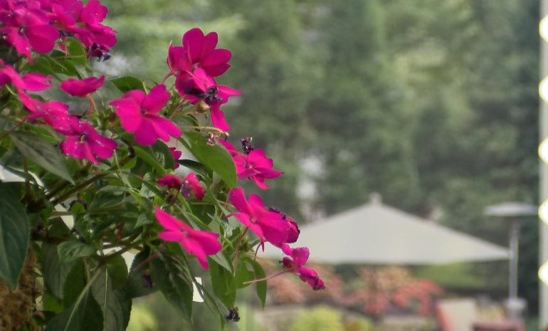 Protecting Your Landscaping During the Warmer Months