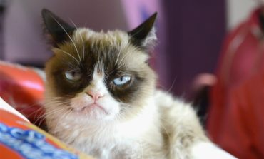 Beloved Grumpy Cat Has Died
