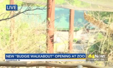 """""""Budgie Walkabout"""" Opening at Mesker Park Zoo"""