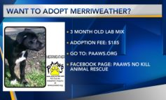 Furry Friend Friday: Merriweather