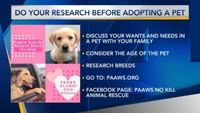 Photo of Furry Friend Friday: Do Your Research Before Adopting