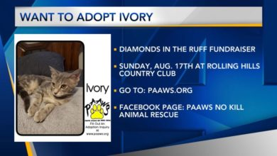 Photo of Furry Friend Friday: Ivory