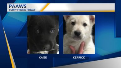 Photo of Furry Friend Friday: Kage and Kerrick
