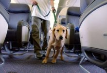 Photo of Proposed Rule Would Allow Airlines to Ban Emotional Support Animals