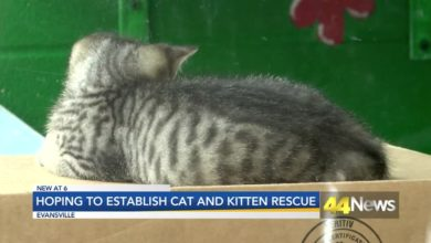 Photo of Evansville Group Aims to Open Kitten and Cat Rescue Center