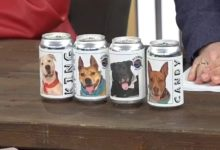 Photo of Florida Brewery Features Sheltered Dogs on Beer Cans