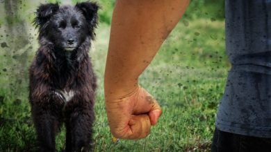 Photo of Illinois Bill Proposes Harsher Penalties for Animal Abusers