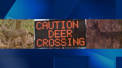 Photo of Transportation Officials Warn of Increased Deer Crossings During Flooding