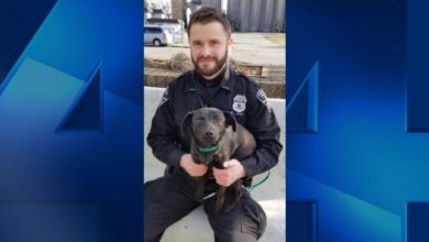 Photo of Help EPD Find a Forever Home for Cynthia the Dog