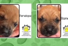 Photo of Furry Friend Friday: Adopt Siblings Romeo and Penelope