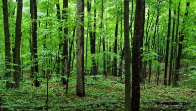 Photo of Hoosier National Forest Limits Number of Groups; Extends Closure for Some Recreation Sites