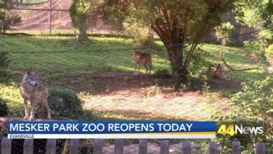 Photo of Mesker Park Zoo Reopens June 15