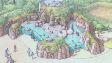 Photo of Mesker Park Zoo's Penguin Exhibit Expected to Be Completed by 2021