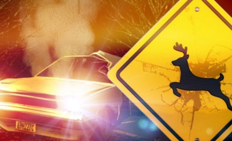 ISP Warns Drivers of Deer on Roadways During Fall Months