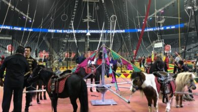 Photo of Hadi Shrine Circus Is Back in Town