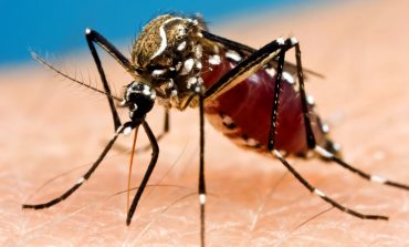 Illinois Reports First Case of West Nile Virus