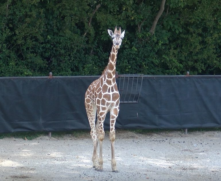 Meet Clementine: Mesker Park Zoo's Newest Addition