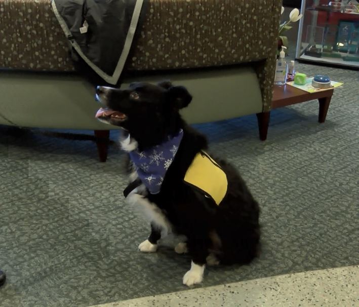 Photo of Pet Therapy Offered At Chancellor Center For Oncology