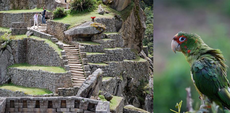 Peru_cropped_900x443_0005_layer_13