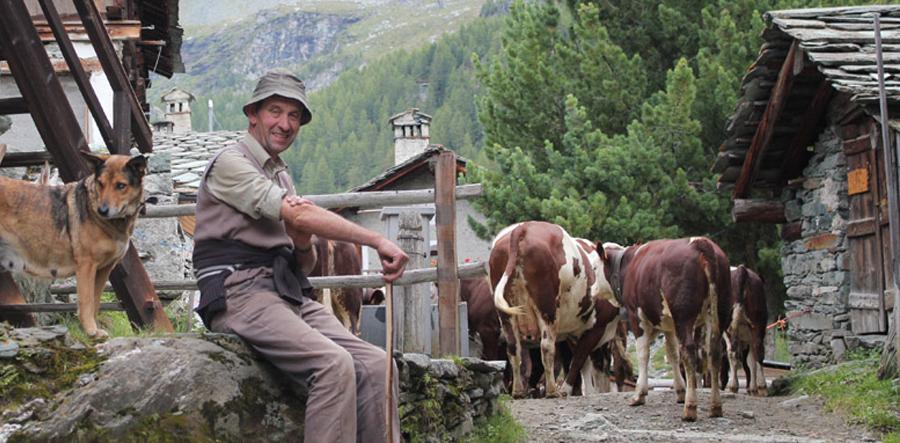 Ticino_cropped_900x443_0002_img_4681