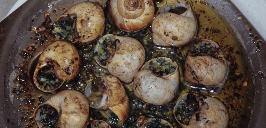 Wj_imgsfromsite_900x433_0001s_0010_aix_snails_dish
