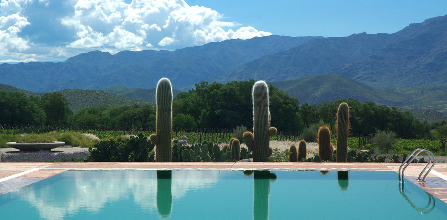 Cactus_with_swimming_pool