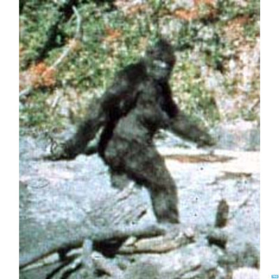 Saving Bigfoot