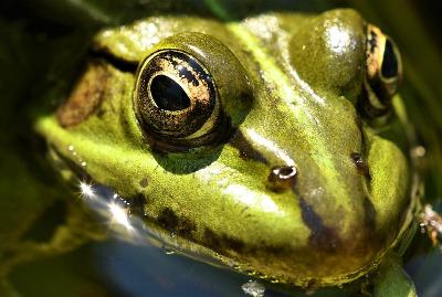 Frog Vision