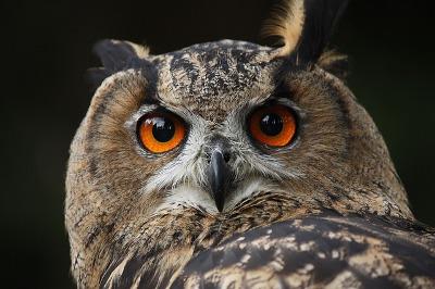 Owl Neck