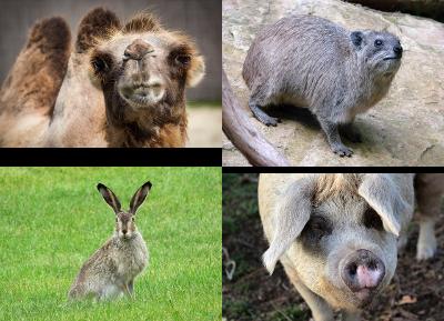 Non-Kosher Animals