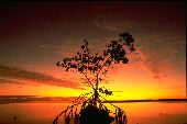 A mangrove makes a beautiful focus point on a menagerie of oranges and reds cast by the setting sun.