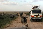 Grazing animals in the Kenya Wilderness