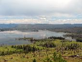 Looking over Yellowstone Lake where the 1988 wildfire left its mark. Burnt trunks and patches of surviving trees can be seen alongside new growth which is starting to turn the landscape green again.