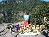 A Tarahumara woman sells woven baskets at the top of Copper Canyon.