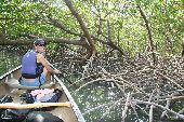 A canoeist gets up close to the vast root system of Florida's mangrove trees.