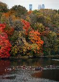 Voyageur canoes paddle past fall trees bursting with red and orange colors and the Minneapolis skyline on the Mississippi.
