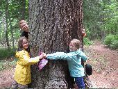 Three kids join hands and wrap their arms around a giant pine tree at Wilderness Inquiry's base camp in the Apostle Islands