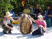 Participants show off the huge sea turtle shell they discovered on a beach in the Florida Everglades.