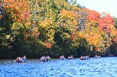Nine voyageur canoes are surrounded by bright fall colors on an autumn day on the Mississippi.
