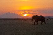 A large elephant's silhouette in an open plain, with a striking sunset in the background.