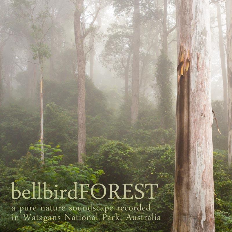 Australian Nature Sounds - 'Bellbird Forest' cover