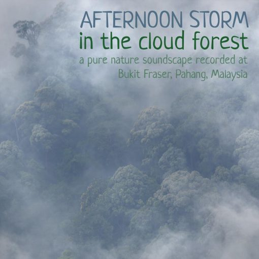 Nature soundscape recording - Afternoon Storm in the Cloud Forest
