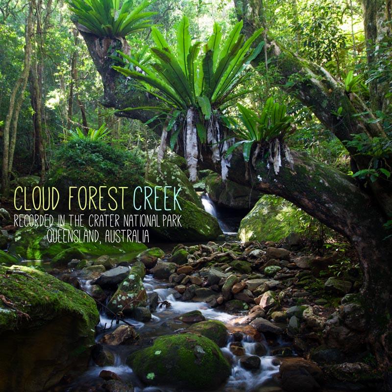 Rainforest Sounds MP3 - C'loud Forest Creek' cover