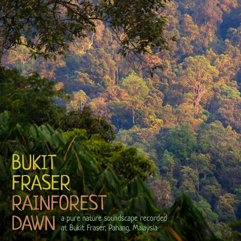Nature Soundscape mp3 - Bukit Fraser