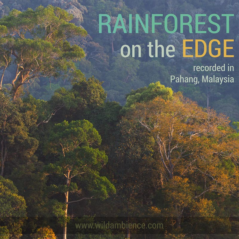 Rainforest on the Edge - Free Nature Sounds Album