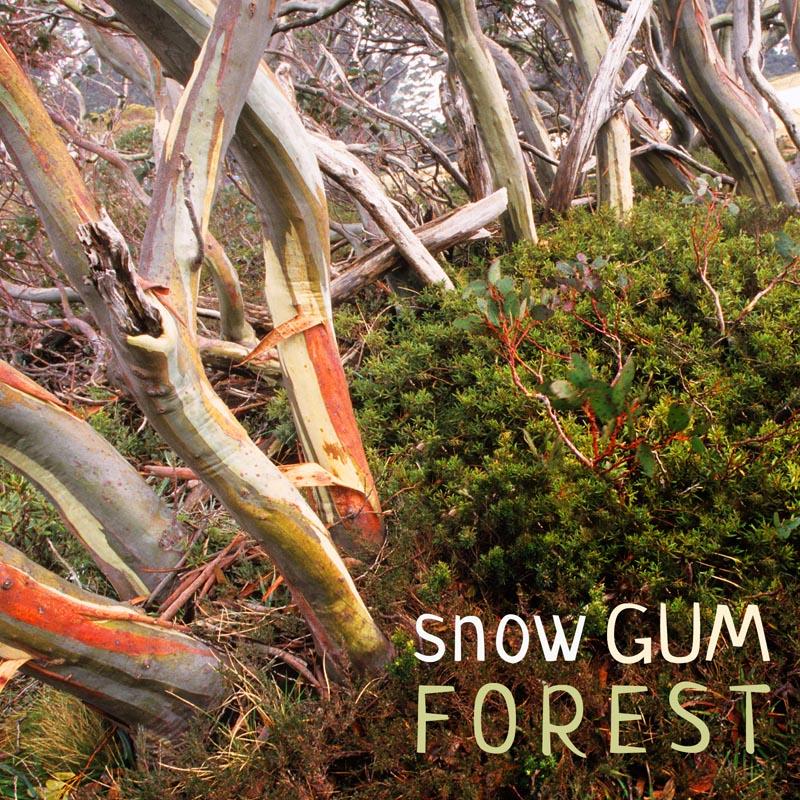 Nature Soundscape Album cover - Snow Gum Forest