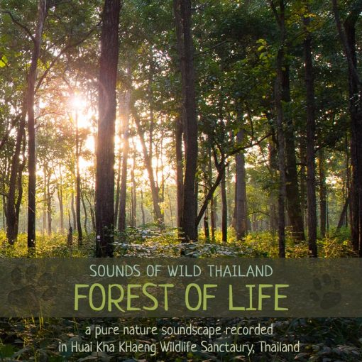 Nature Soundscape Album - 'Forest of Life'