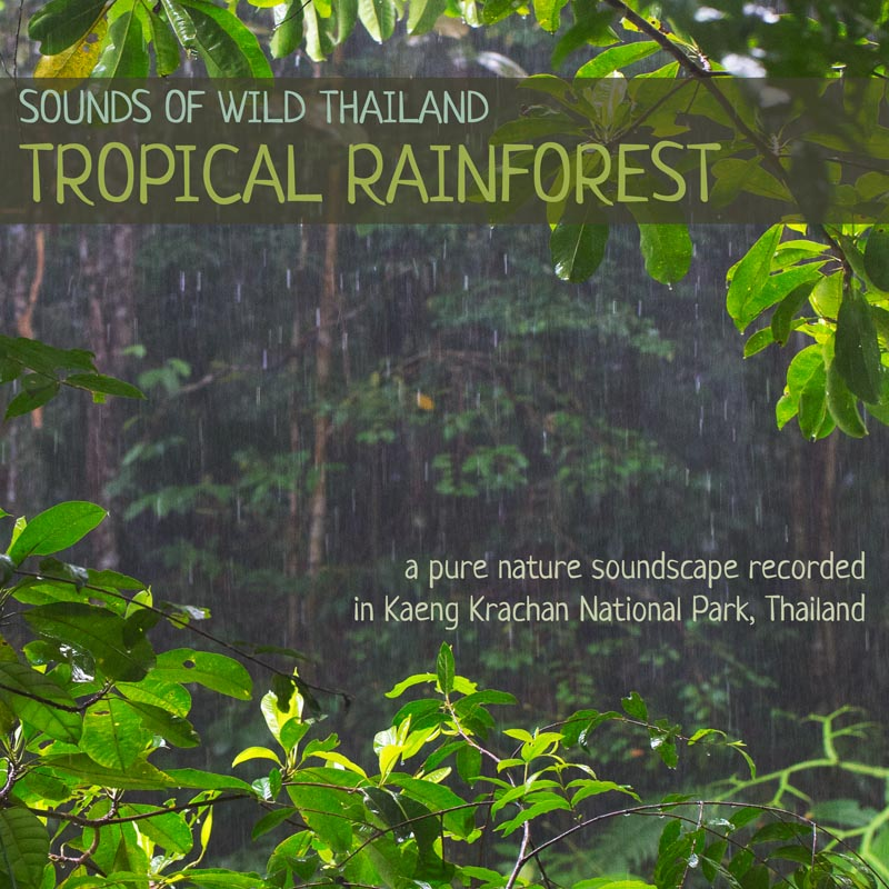 Sounds of Wild Thailand I: Tropical Rainforest