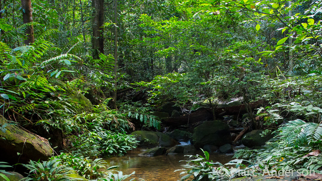 Soundscapes of Kubah National Park, Borneo