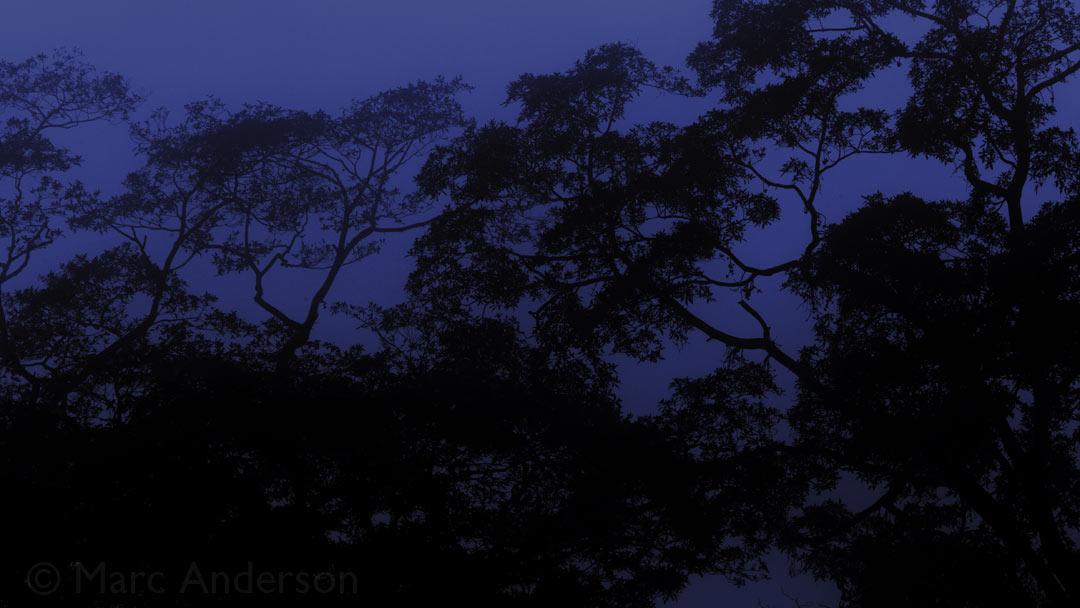 Voices of the Night – Taman Negara, Malaysia